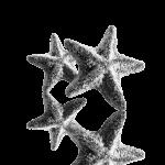 Super-vahva meritähti